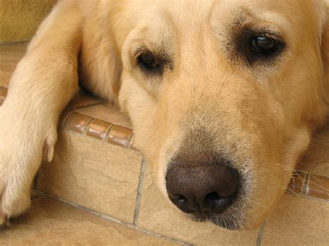 how can a puppy hold its bladder normal or not dogs and utis healthy paws pet insurance