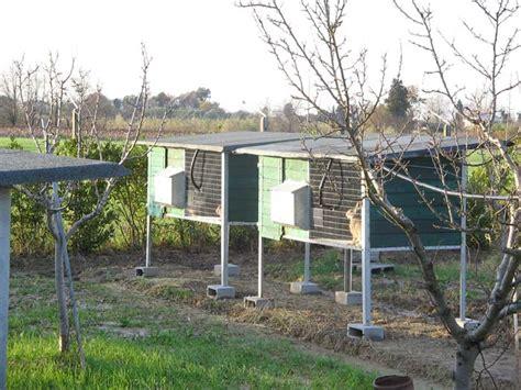 gabbie per lepri la nuova fattoria lepri per ripopolamento l allevamento