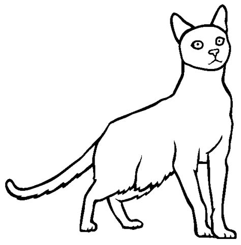 black and white coloring pages of cats cat black white coloring page