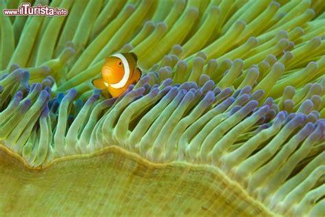 Sho Dove Di Indo l isola drago di komodo tra i varani parco nazionale mar di flores da vedere komodo