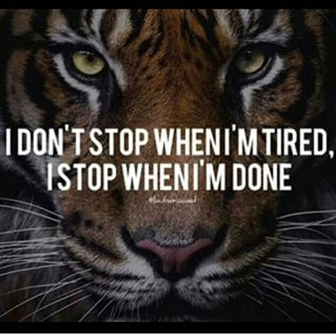 tiger quotes motivational tiger quotes gallery