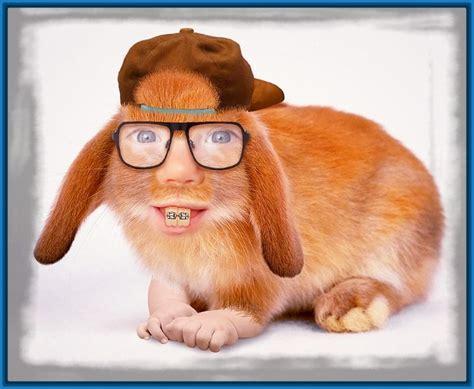 im 225 genes de perros y gatos graciosas para el whatsapp imagenes de grados graciosas imagenes graciosas de conejos