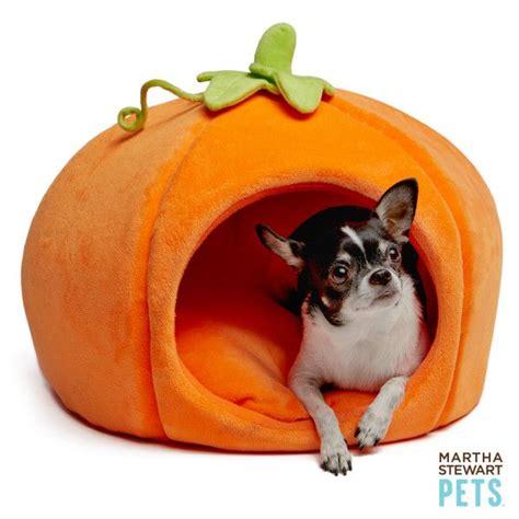 martha stewart pet beds it s pumpkin season benefits of pumpkin for dogs dog mom days