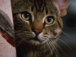 Cats Eye 1985 Stephen King S Cat S Eye Trailer 1985 Video Detective