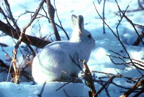 koleksi gambar kelinci lucu  imut gambar foto wallpaper
