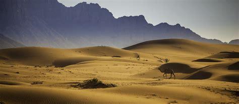papel de parede deserto ecossistema forma de terra