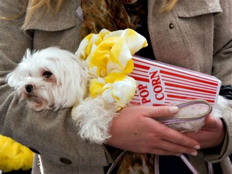 popcorn for dogs here are 10 unamused pets dressed as food including a rice krispie cat
