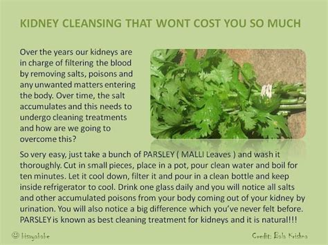 Parsley Kidney Detox by Firebert The Healing Power Of Parsley