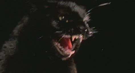 film mandarin black cat the black cat 1981 cinema cats