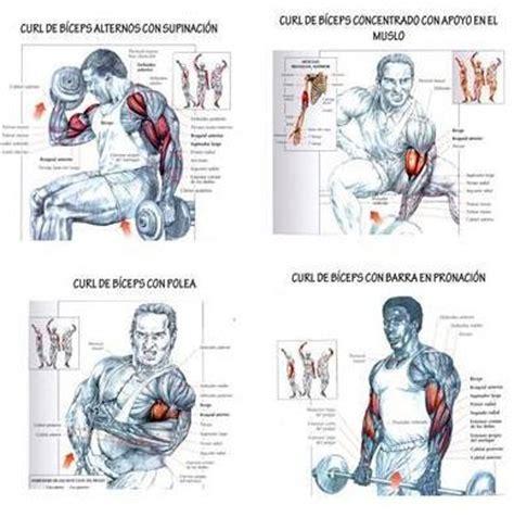 biceps workout pdf eoua