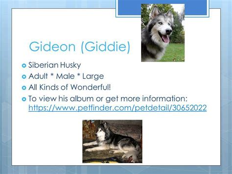 northern lights sled rescue northern lights sled rescue current adoptable dogs nov 2014