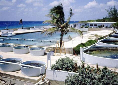 boatswain s adventure marine park 34 best cayman islands hidden gems images on pinterest