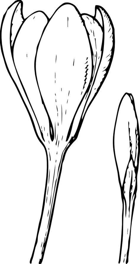 coloring page flower bud black and white plant cliparts co