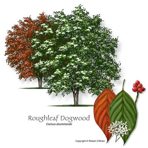 the dogwood institute school of woodworking ufei selectree a tree selection guide
