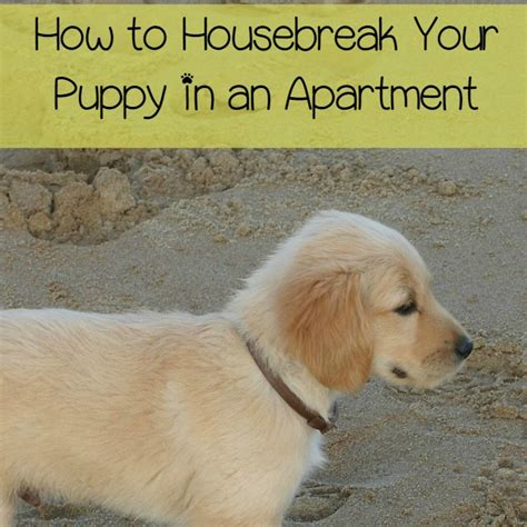 how to housebreak a puppy how to housebreak your puppy in an apartment dogvills