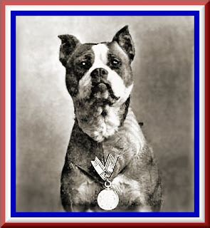 Sgt Stubby Pitbull Follow The Piper Sergeant Stubby War