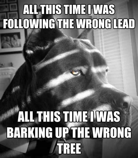 Know Your Meme Dog - image 869388 noir dog know your meme