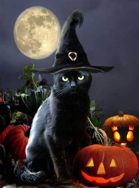 black cat countdown day  witches cats cat box zen