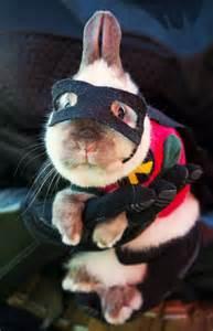 halloween costumes for bunnies 50 funny pet costumes 50 pics amazing creatures