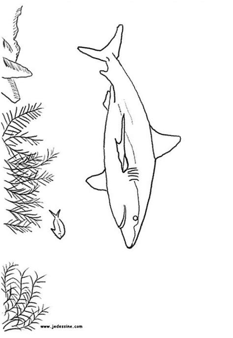 Shark Coloring Pages Grey Reef Shark Megalodon Shark Coloring Pages