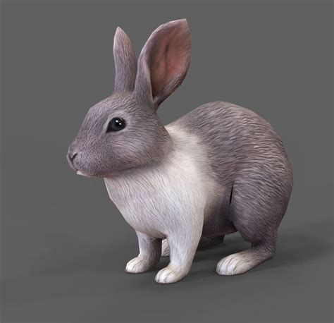 3d Model Rabbit 3d model rabbit vr ar low poly fbx ma mb tga