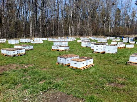 canada considering reopening border to u s package honey bees