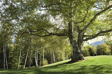 The Olive House Partisi adottare un albero e sostenere riforestazione nel mondo