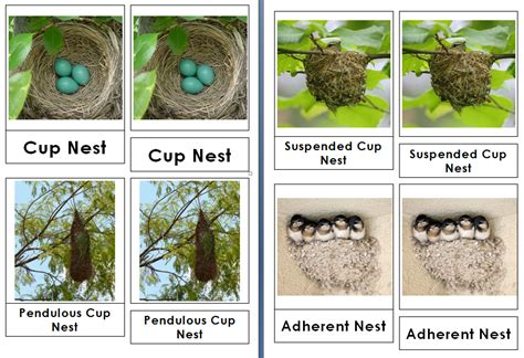 types of bird nests 3 part cards live and learn farm