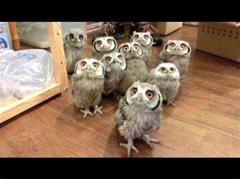 Owl Lucu 7 owl sebuah burung hantu lucu dan imut burung hantu