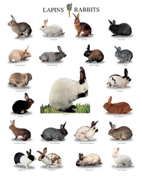 rabbit colors colors bunnies rabbits hares