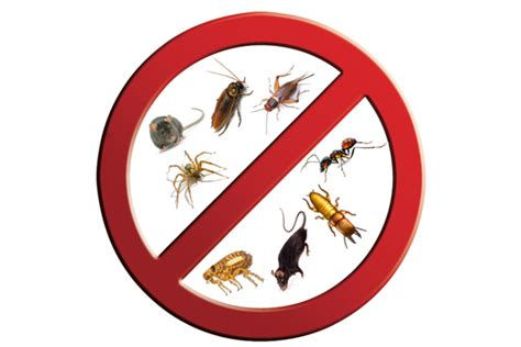 Ideas For Offices by Different Pest Control Techniques And Equipments