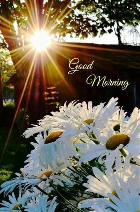 good morning sun  flowers pictures   images