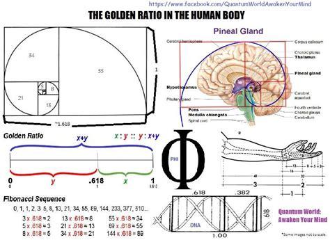 golden ratio dna spiral what is the golden ratio quantum world awaken your mind