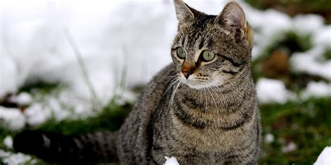 the feral irishman world s most secure house a zombie bunker 10 outdoor cat houses world s best cat litter blog