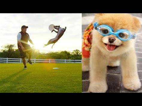 amazing dogs world s most amazing dogs in motion challenge in 4k