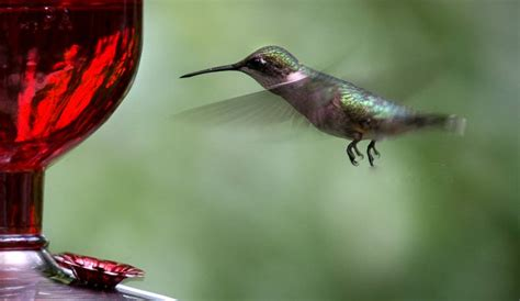 planning your landscape for hummingbirds brookside lawn