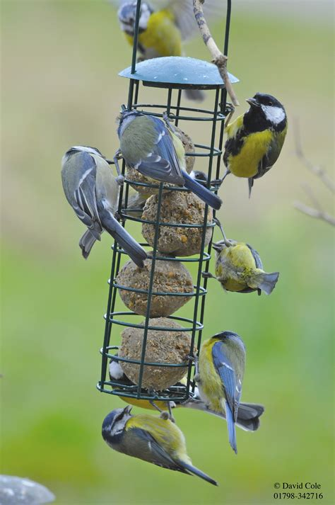 wild bird food bulk bird feed feeders for wild birds