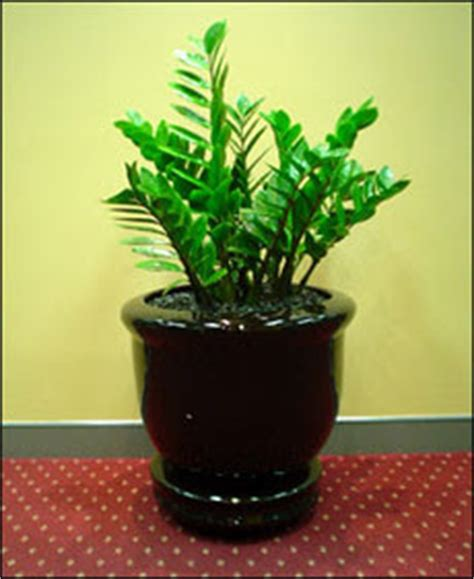 good plants for office the office plants