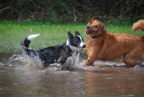 puppies in water two dogs in water coral gables walking and pet sitting