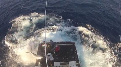 titanic one boat came back hook line and sinking feeling as 300kg black marlin jumps