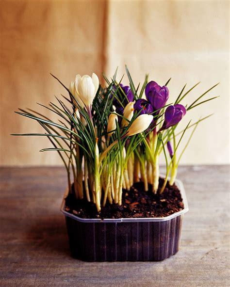 vasi da fiori in plastica oltre 25 fantastiche idee su vasi da fiori su