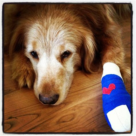 paw bandage your pet aid kit could save a healthy paws pet insurance