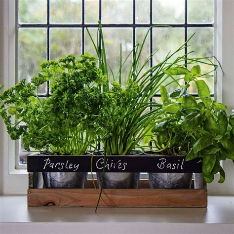 Window Herb Garden Pots 25 Best Ideas About Indoor Window Boxes On
