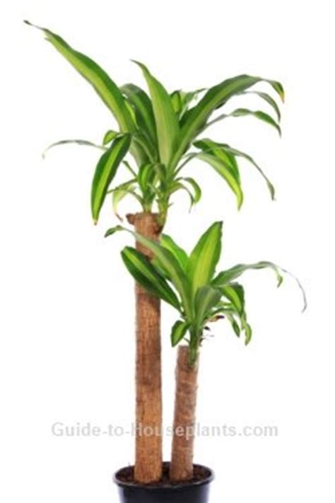 buy house plants custom 60 names and pictures of common custom 60 names and pictures of common houseplants design