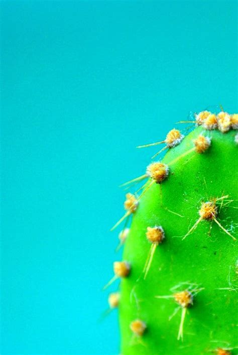 Poster Set Of 2 Tropical Leaves Cactus 2xa4 1350 best images about inspiration on rocks