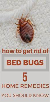bed bugs home remedy get rid bed bugs and pests
