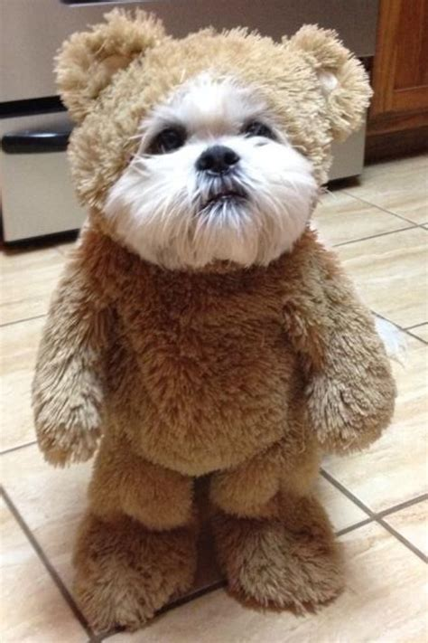 shih tzu ewok costume 25 best ideas about ewok costume on names of galaxies w and