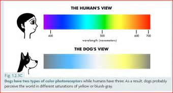 colors we can t see can dogs see color and how do we dr yin