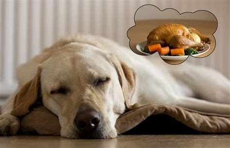 dreams about dogs what do dogs about and the science of sleep nextgen