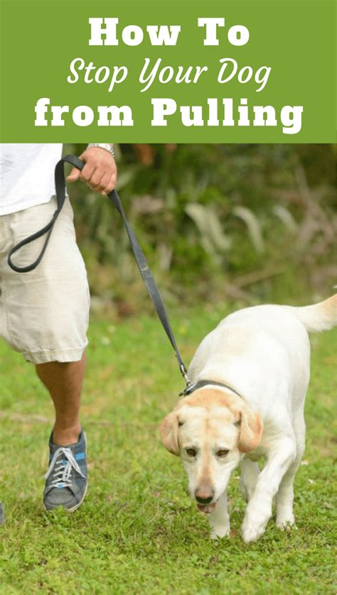 how to to stop pulling on leash leash walking how to stop your pulling on leash